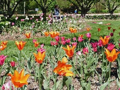 Photograph - Lilacia Park by Kathie Chicoine