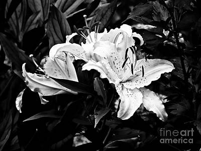 Photograph - Lilies 2 by Marcia Lee Jones