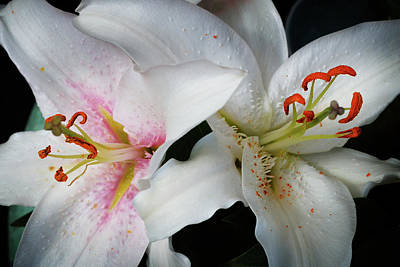 Photograph - Lilies by Phil Fitzsimmons