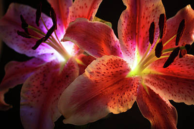 Day Lilly Photograph - Lilly 001 by Bobby Villapando