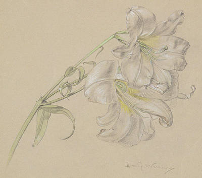 Still Life Drawing - Lily by Albert Williams
