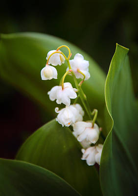 Flowers Of Spring Digital Art - Lily Of The Valley by Jessica Jenney