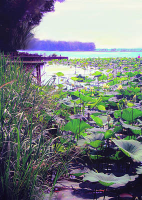 Digital Art - Lily Pads by Bonnie Willis