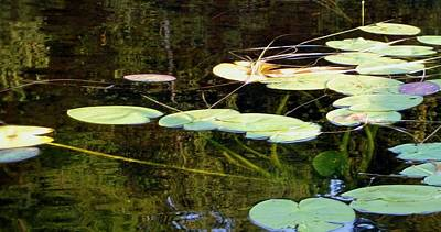Photograph - Lily Pads On The Lake by Mary Wolf