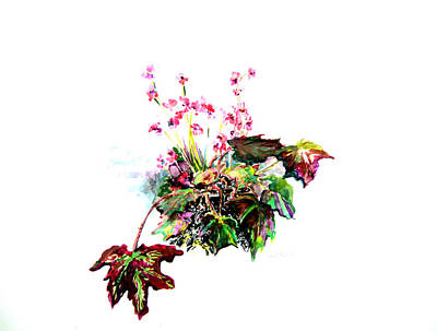 Franklin Park Conservatory Drawing - Linda Begonia by Mindy Newman