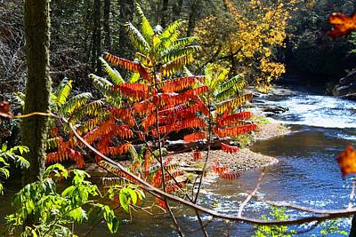 Photograph - Linville River by Kathryn Meyer