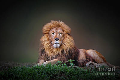 Photograph - Lion King by Charuhas Images