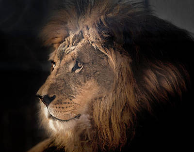 Photograph - Lion King Of The Jungle by James Sage