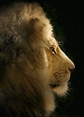 Lion Of Judah II Print by Sharon Foster