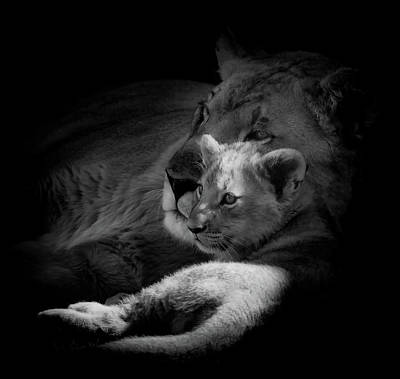 Photograph - Lioness And Cub by Pixabay