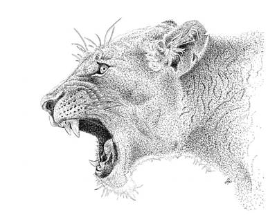 Recently Sold - Animals Drawings - Lioness by John Prehart