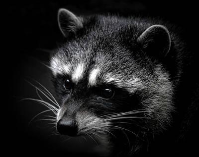Photograph - Little Bandit   by Athena Mckinzie