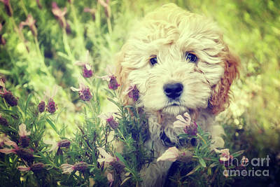 Puppy Mixed Media - Little Puppy by Angela Doelling AD DESIGN Photo and PhotoArt