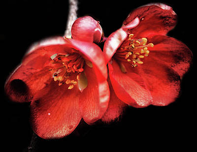 Floral Royalty-Free and Rights-Managed Images - Little Red Flower by Martin Newman