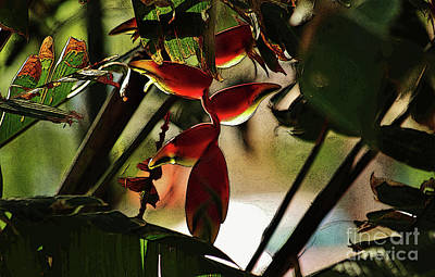 Photograph - Lobster Claw Heliconia by Craig Wood