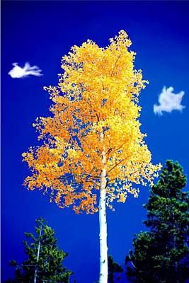 Lone Golden Aspen Art Print