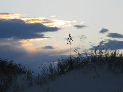 Photograph - Lone Plant At White Sands by Patricia Januszkiewicz