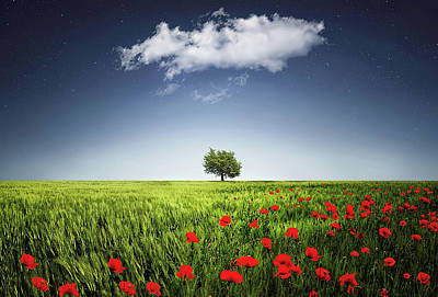 Autumn Leaf Photograph - Lone Tree A Poppies Field by Bess Hamiti