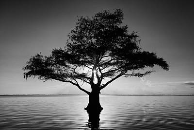 Photograph - Lone Tree At Blue Cypress Lake  by Stefan Mazzola
