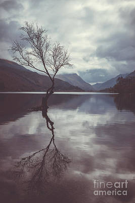 Lone Tree At Llyn Padarn Art Print