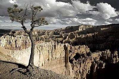 Lone Tree Canyon Art Print