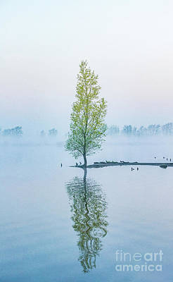 Photograph - Lone Tree by Casper Cammeraat