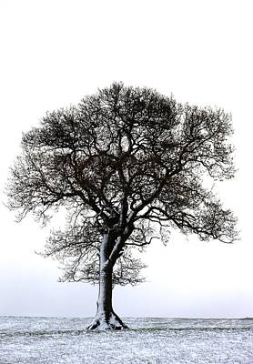 Lone Tree In Field Art Print by John Short