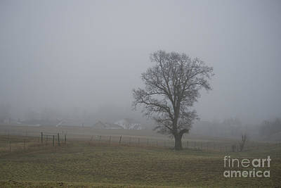 Wilderness Camping - Lone Tree in the Fog by David Arment