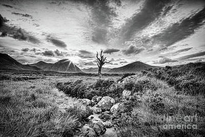 Rannoch Moor Photograph - Lone Tree, Rannoch Moor, Scotland by Colin and Linda McKie