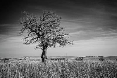 Photograph - Lone Tree  by Ricky Barnard