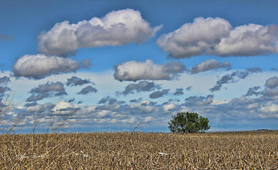 Photograph - Lone Tree by Sylvia Thornton