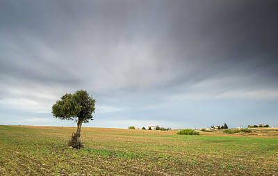 Lonely Olive Tree  Original