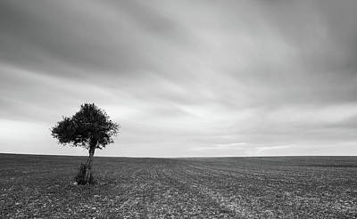 Lonely Olive Tree With Moving Clouds Original