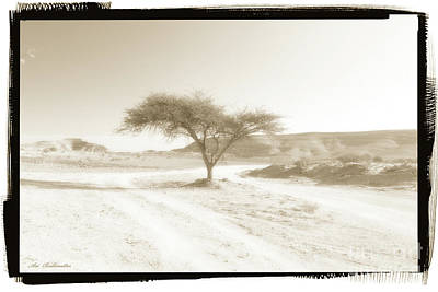 Photograph - Lonely Tree by Arik Baltinester