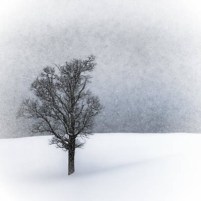 Snowfall Digital Art - Lonely Tree Idyllic Winterlandscape by Melanie Viola