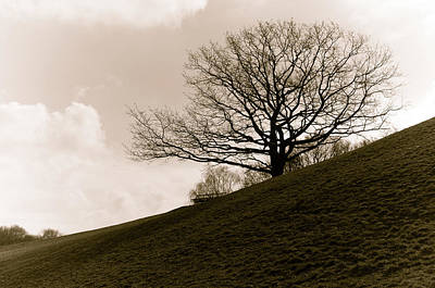 Photograph - Lonely Tree by Sergey Simanovsky