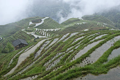 Landscap Photograph - Longsheng Rice Terraces by Michele Burgess