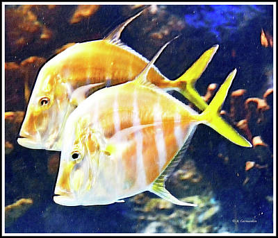 Photograph - Lookdown Fish Pair by A Gurmankin