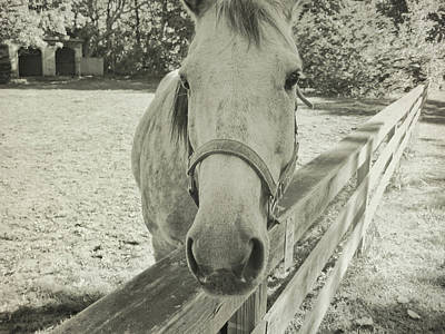 Photograph - Looking For A Treat by Jamart Photography