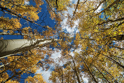 Photograph - Looking Up by Jeff Niederstadt
