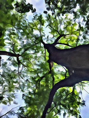 Que Photograph - Looking Up by Judy Bernier