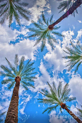 Photograph - Looking Up Palm Trees And Sky Vertical by David Zanzinger