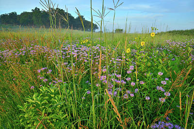 Photograph - Lost Valley Wildflowers In Glacial Park by Ray Mathis