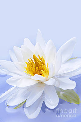 White Water Lily Photograph - Lotus Flower by Elena Elisseeva