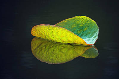 Photograph - Lotus Leaf by Steve Stuller
