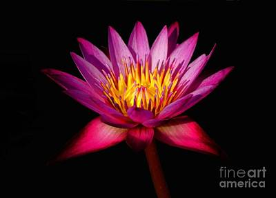 Photograph - Lotus by Louise Fahy