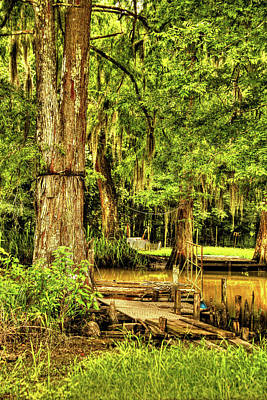 Photograph - Louisiana Cajun Swamp by Ronald Olivier