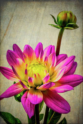Photograph - Lovely Textured Dahlia by Garry Gay