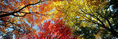 Fall Foliage Photograph - Low Angle View Of Trees by Panoramic Images
