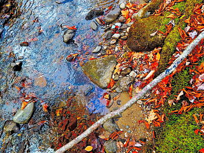 Photograph - Lower Childs Brook 29 by George Ramos